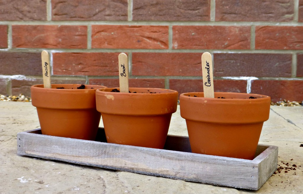 trio herb kit homebase planted with lollipop stick names