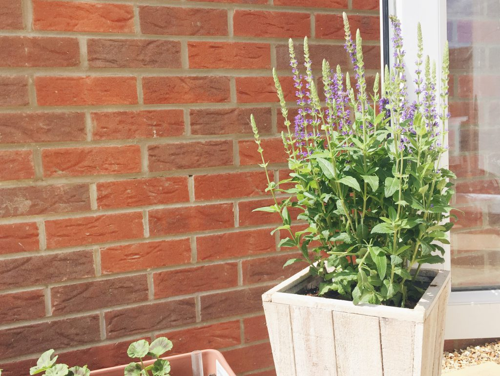 Astilbe planted container