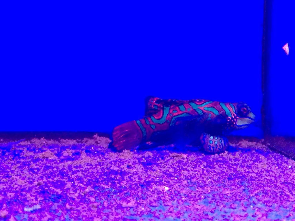Porton Pet Shop fish