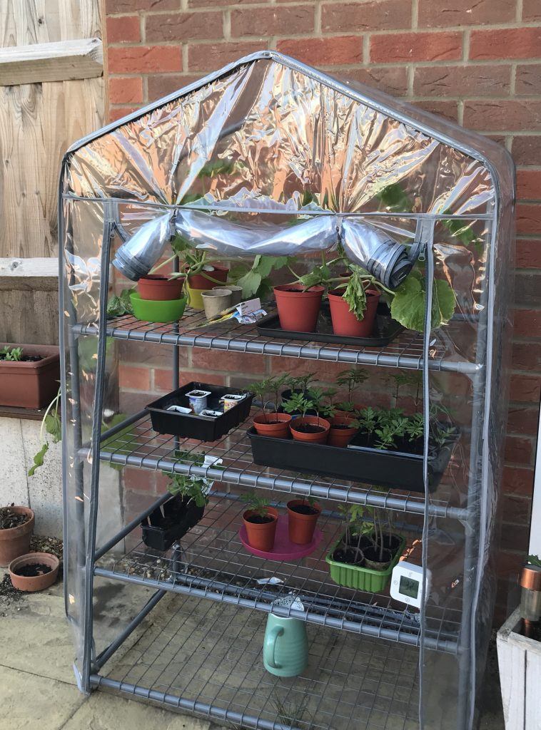 Mini greenhouse filled with vegetables